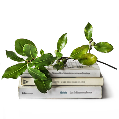 Books with a branch of leaves on top