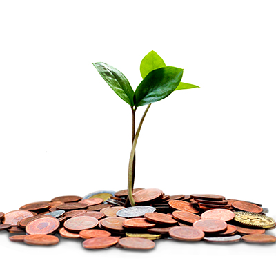 A sapling growing out of a pile of coins