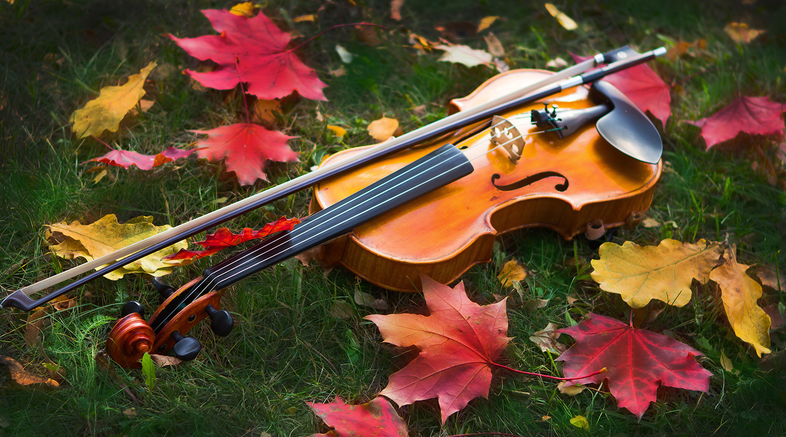 violin in the grass with red maple leaves all around